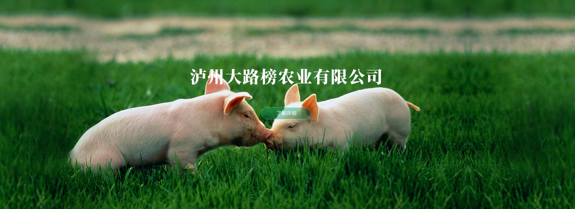 泸州土猪养殖
