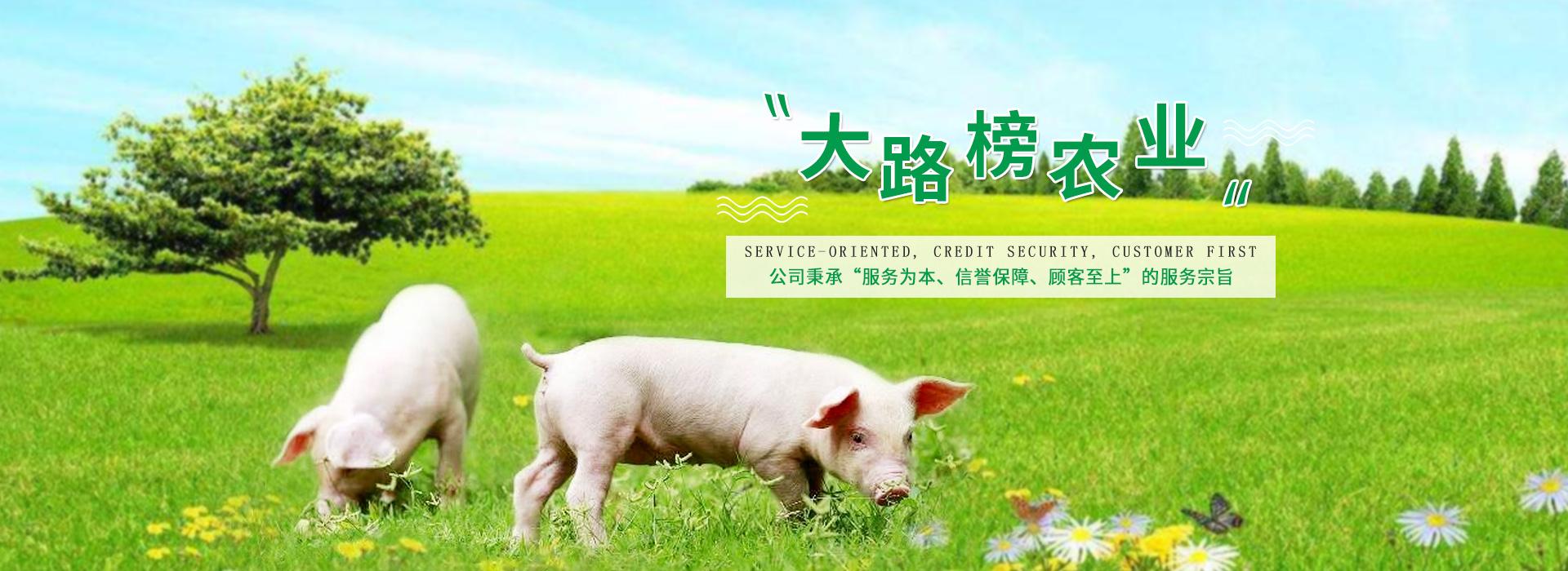泸州土猪,泸州土猪价格
