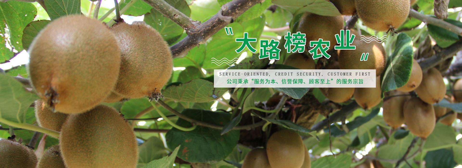 泸州猕猴桃种植基地